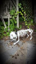 Light up + Sound Skeleton Dog on Lead Halloween Decoration Skull Outdoor Garden