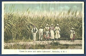Canes in Arrow and Native Laborers, Barbados, B.W.I.