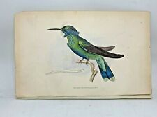 DELUXE ED Hand-colored Plates 1840 Jardine History Hummingbirds #1 Blue-bellied