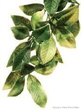 Exo-Terra Mandarin Jungle Plant - Small