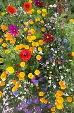 JustSeed - Bee Friendly Annual and First Year Flowering Mixture - 1g Seeds