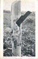 Vintage Disaster RP  Postcard, Berlin Wisconsin Cyclone, 1907,   pb4