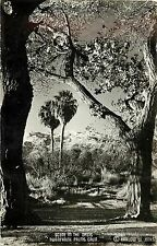 c1950 RPPC Postcard; Oasis Scene, Twentynine Palms CA Harlow Jones Photo