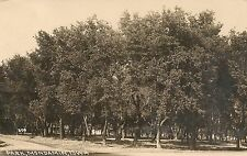 View of the Park in Mondamin IA RP Postcard 1915