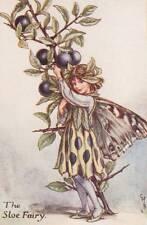 Flower Fairies: The Sloe Fairy Vintage Print c1930 by Cicely Mary Barker
