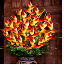 100 Indoor Potted Plant Flower Orange Strelitzia Reginae Seeds Bird Of Paradise