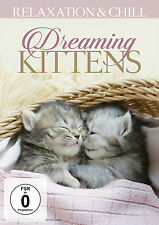 DVD Katzen Träume / Dreaming Kitty's - Slow Ambient And Lounge TV