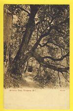 cpa Old Postcard CANADA VICTORIA Arbitus Tree
