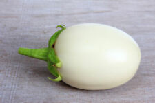 10 Seeds Ornamental Eggplant Golden Egg Tree Container Plant Overstock Price