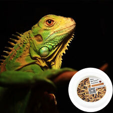 Mealworm Plastic food dish crested gecko bearded dragon Reptile