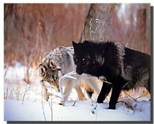 Gray and Black Wolf in Snow Wildlife Animal Picture Art Print (8x10)