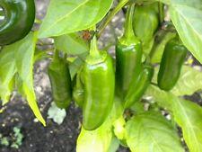 40+ ORGANIC JALAPENO JALAPEÑO Pepper Seeds