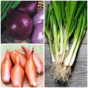 3 verschiedene Zwiebelsorten Samen Angebot