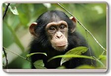 Chimpanzee Fridge Magnet 01