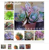 100  seeds exotic-resistant beautiful flowering plant rare herb cactus aloe seed
