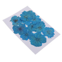12Pieces Dyed Blue Pressed Dried Sakura Flowers Cherry Blossom for Art Craft