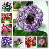 100 Pcs/Bag Rare Real Sinningia Speciosa Seeds Beautiful Bonsai Gloxinia Flower