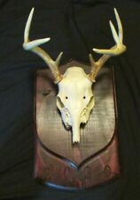 17 X 10 1/2 Taxidermy Mounting Plaque With Year Hunting Deer Mount Whitetail