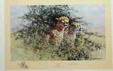 cheetah david shepherd limited edition