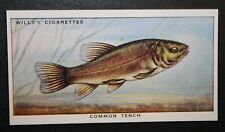 Common Tench    Doctor Fish   Superb Vintage Card  VGC