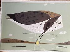 CHARLEY CHARLES HARPER   Eskimo Curlew  New Art print  Bird shell