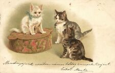 Cats, Cute White Kitten on a Pillow with Other Cats, Old Postcard Pre. 1900
