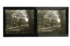 Horse riding Wood Bologna Paris France Photo Stereo Plate glass c1930
