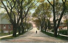 A Quiet Day On A Tree-Lined Montreal Street, Sherbrooke PQ Quebec, Canada 1908