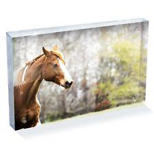 "Beautiful Brown Horse Photo Block 6 x 4"" - Desk Office Art Cool Gift #8759"