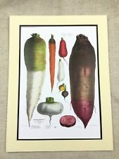 Horticulture Print Root Vegetables Turnip Beets Carrot Variety Vilmorin Andrieux