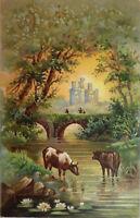 Vintage Postcard Cows Bull Stream Bridge with a 13 star Flag cancellation 1910