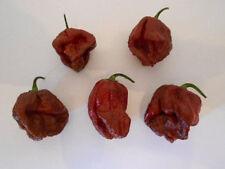 7 POT BROWN Trinidad Scorpion 5 semi-SUPER HOT CHILI peperoncino semi