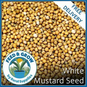 White Mustard Seed | Green Manure | Garden Greening