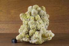 Spectacular Sklodowskite + Calcite + Gypsum Specimen, Animas, Chihuahua, Mexico