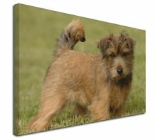 """Norfolk Terrier Dog 30""""x20"""" Wall Art Canvas, Extra Large Picture P, AD-NT1-C3020"""