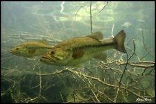"""Realfish Inland Series: """" Large-Mouth Bass #2 """" Fish Mat Floor Mat Doormat 24x36"""