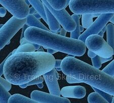 BACTERIOLOGY BACTERIA MICROSCOPE TRAINING BOOK COURSE