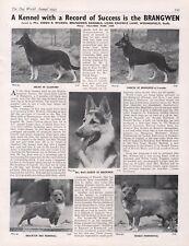 GERMAN SHEPHERD CORGI DOG WORLD 1945 DOG BREED KENNEL ADVERT PRINT PAGE BRANGWEN