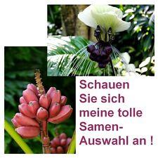 Super-Zimmerpflanzen-Set: Rosa Zwergbanane und wunderschöne Fledermausblume !