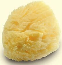 Large Luxurious Greek Silk Soft Natural Sea Sponge Adult Bath 5.5''- 6''