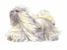 LHASA APSO.         3 Blank Dog greeting cards by Christine Groves