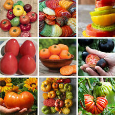 Lots 200PCS Rare Mixed Tomato Seeds Vegetable Fruit Seed Home Garden Plant Decor