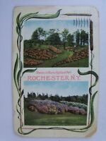 Vintage 1910 Flowers in Highland Park, Rochester New York NY Postcard