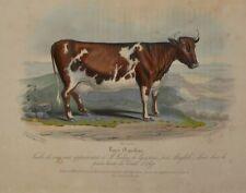 Lithographie XIXème Couleur et Gommée - Vache - Animal - Hermann Eichens