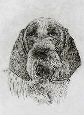 GEOFFREY LASKO - ITALIAN SPINONE  DOG - LISTED ARTIST ETCHING -S&N - FREE SHIP