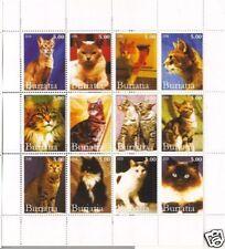GATTI  - CATS BURIATIA 2005 1