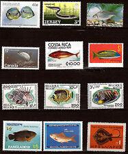 Tous pays  Poissons de mer toutes espèces  sea fish 28m415