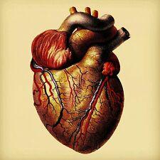 Heart Greeting Card Re-imagined Vintage Anatomical Image Anatomy Bones