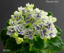 Planet Kid 2 Blätter/ 2 leaves African Violet Usambaraveilchen