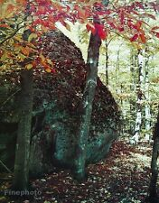 1950's Vintage 16x20 NATURE LANDSCAPE Forest Tree Rock Fall Foliage ELIOT PORTER